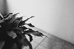 Jack Walsh #white #rough #black #photography #jack #minimal #and #walsh #plant