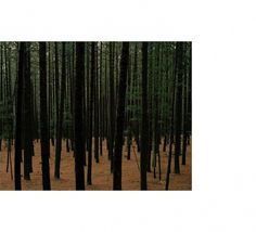 James P. Morse - Mystical Naturalism #wood #forest #photography