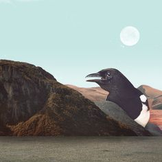 #collage #art #handmade #digitalcollage #bird #magpie