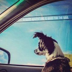 A good adventure is good for the soul. -@Eyoalha http://ift.tt/1hn6LYE #illustration #dog