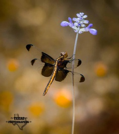 #macro_vision: Macro Insect Photography by Norman Rowsey