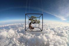 Makoto Azuma Uses the Stratosphere as a Backdrop For His Latest Floral Art space plants photography flowers #frame #sculpture #clouds #tree #design #plant #bonsai #photography #atmosphere #stratosphere #art #cube