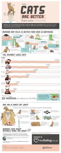 What Cats are Better than Men #infographic #design #graphic