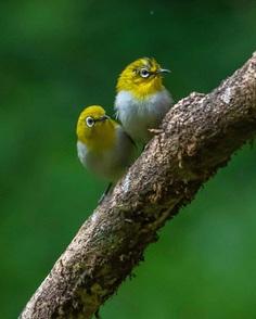#indianbirds: Colorful Birds Photography by Balaji Krishnan
