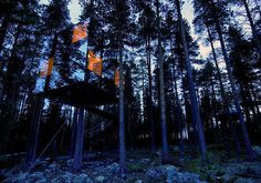 Mirror Tree House In Sweden #treehouse