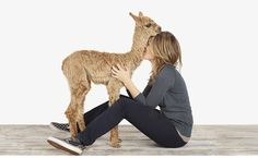 About Our Site #animal #woman #love #alpaca