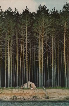 Forest Dwellings #forest #pine #camping #national geographic