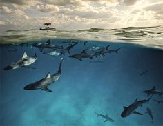 veltpotd.jpg (изображение «JPEG», 580x452 пикселов) #ocean #water #shark