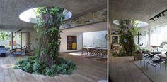 Tree Inside A Livingroom #interior #design #decor #deco #decoration