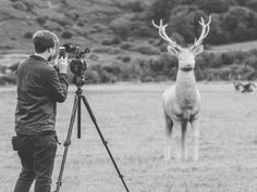 #animal #black&white #black #photography #art #stag #deer