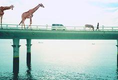 I love monday #bridge #photography #girl #animals