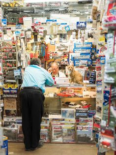 Shop Cats of New York by Andrew Marttila