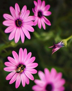 Fine Art Flowers Photography by Dina Telhami