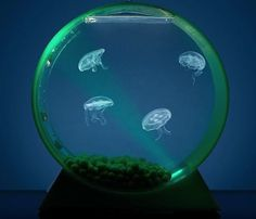 Desktop Jellyfish Tank #home