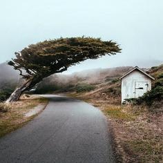 Winding roads in Marin County.