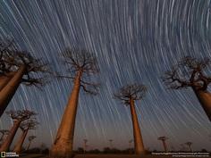 Van Gogh Baobabs, Maggie Machinsky