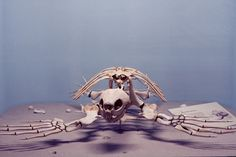 Paul Octavious - Yale Peabody Turtle skeleton photography