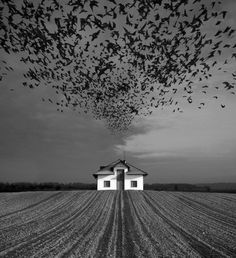 Photo Manipulations by Dariusz Klimczak #inspiration #photo #photography #manipulations