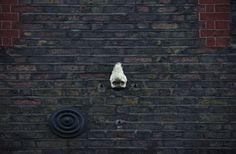 Non ho voglia di scrivere #brick #london #wall #nose