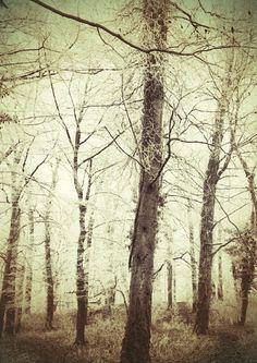 Chris van Niekerk #woods #trees