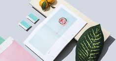 querido tulum branding corporate design graphic design modern visual modern inspiration best türkis rosa pink turquoise plant green art bea