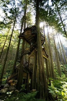 Treehouse #tree #forest #treehouse #home