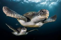 The Stunning Winners Of The 2017 Underwater Photographer Of The Year