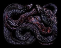 Inspiration - 2/17 - BARB #snakes #pictures #photography #guido #mocafico #stunning