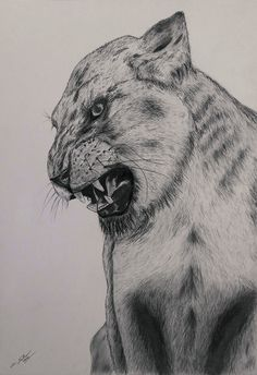 Realism Drawing - Lion on Behance #roar #beast #hunter #lion #big #africa #cat #illustration #snarl #animal #sketch #beauty