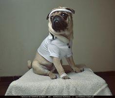 Gutiërrez #tennis #portrait #cute #pug #dog