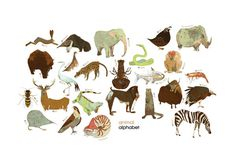 Animal Alphabet by The Tree House Press/Marc Aspinall #illustration