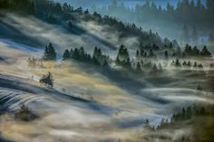 Foggy Landscapes of Slovenian Forests by Filip Eremita