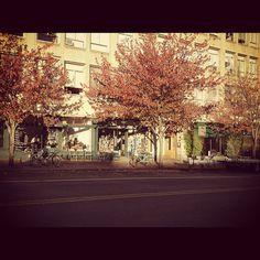 portland #tree #sun #portland #bike
