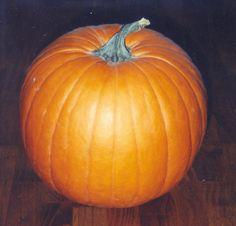 pumpkin #halloween #pumpkin #fall #orange #brown #90s #flash