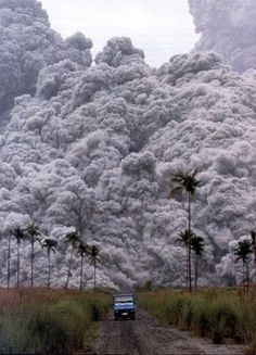 FFFFOUND! #photography #volcano #tree #palm