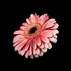 Fine Art Flower Photography by Cristiane Teston