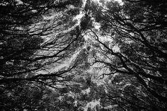 Eerie & Beautiful Photography by Daniel Castañeda I Art Sponge