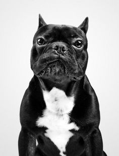 Dog Portraits by Marko Savic | Professional Photography Blog #inspiration #photography #animal #portrait
