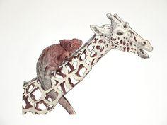 Jaume Montserrat Carvajal   PICDIT #art #animal #pencil #drawing