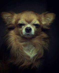 Dramatic Portraits Of Animals Expression Like Human Emotions #animal photography #Cute Dog #Portrait Photography
