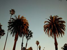 LA, 2012. #photography #street #urban #USA #losangeles #palm