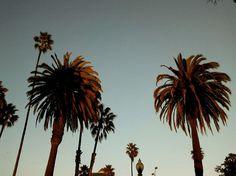 LA, 2012.  #photography #street #urban #USA #losangeles #palm