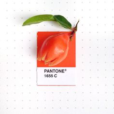 Tiny PMS Match | PICDIT #design #color #pantone #art #colour