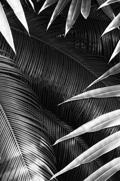 Palm // #photography