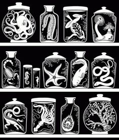 design « sakurasnow #specimen #white #jars #black #illustration #and