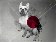 My french bull | www.luchotrejo.com.ar #didot #dog #the