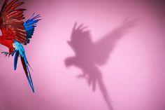 Photography(Parrot # 14 by Sølve Sundsbø,2008, vianicoladugo) #slve #photography #sundsb