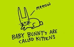 Baby bunnies are called 'kittens' - Learn Something Every Day #kitschkram
