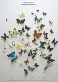 Baubauhaus. #butterflies #poster