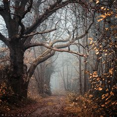 Gloomy Fall Photo #woods #autumn #fog #tree
